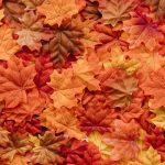 Jak wykorzystać nadchodzącą jesień?